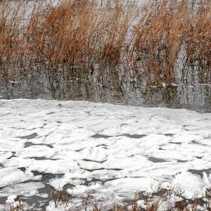 Frozen foam from a lake